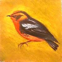 Warbler painting