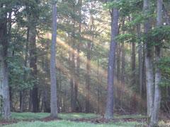 rr__forest.jpg